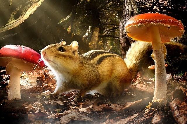 斎藤工が案内する大自然「小さな世界はワンダーランド」予告編公開