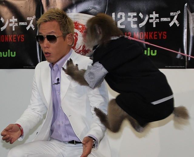 じゅんいちダビッドソン、サルに完敗! 跳び蹴りで時計壊れる