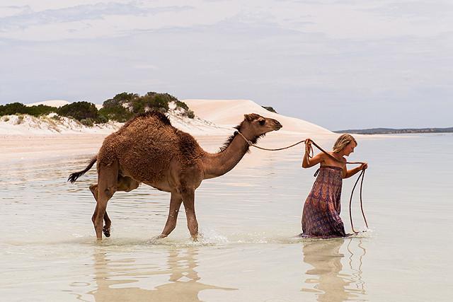 ミア・ワシコウスカがラクダと旅する「奇跡の2000マイル」の一場面