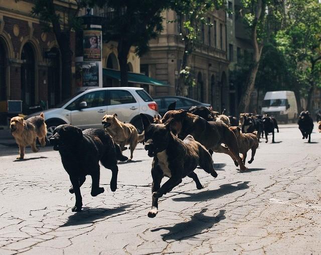 街を駆け抜ける犬の大群