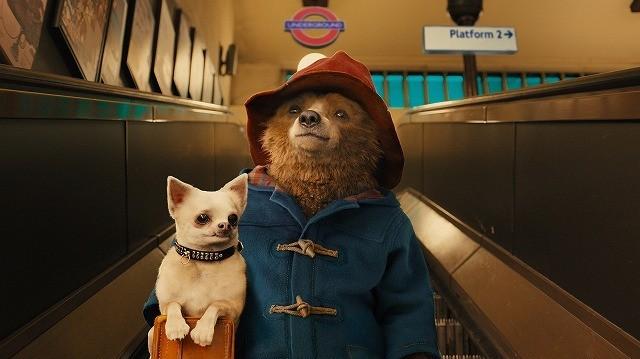 紳士なクマ「パディントン」来年1月公開!愛らしい特報もお披露目