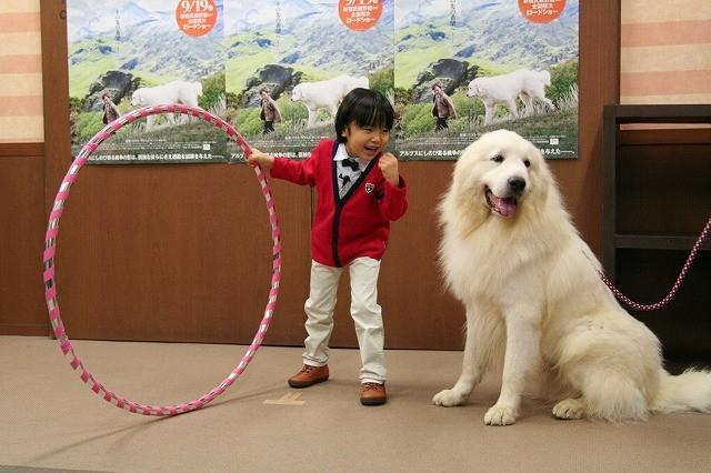 寺田心くん、体重3倍の大型犬に振り回され大慌て!