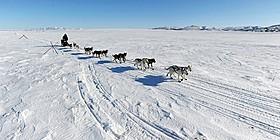 厳冬の地で活躍するアラスカの犬ぞり「バルト」