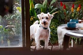 平田家の騒動を目撃する飼い犬・トト「家族はつらいよ」