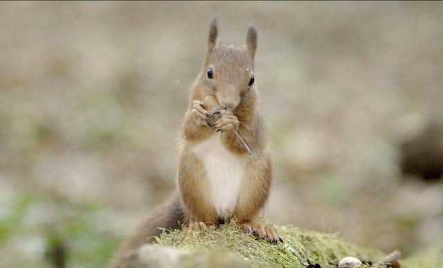 愛らしい動物たちに癒される「シーズンズ」劇中カット初公開!