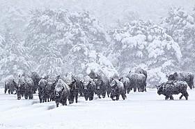 気まぐれな動物に、ストーリー性をもって動いてもらう撮影術とは?「シーズンズ 2万年の地球旅行」