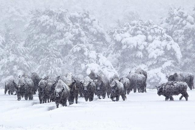 動物ドキュメンタリー「シーズンズ」、野生生物の生態を利用した撮影術が明らかに!
