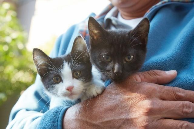 可愛すぎる姿に癒される「猫なんかよんでもこない。」主役ネコオフショット一挙公開