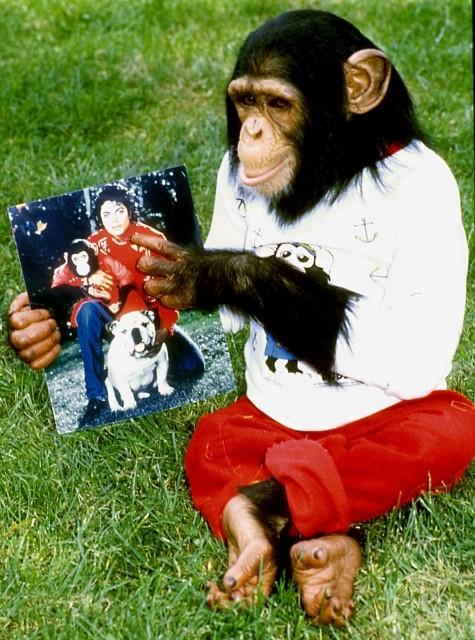 マイケルが愛したチンパンジー「バブルス」の物語がストップモーションアニメ化