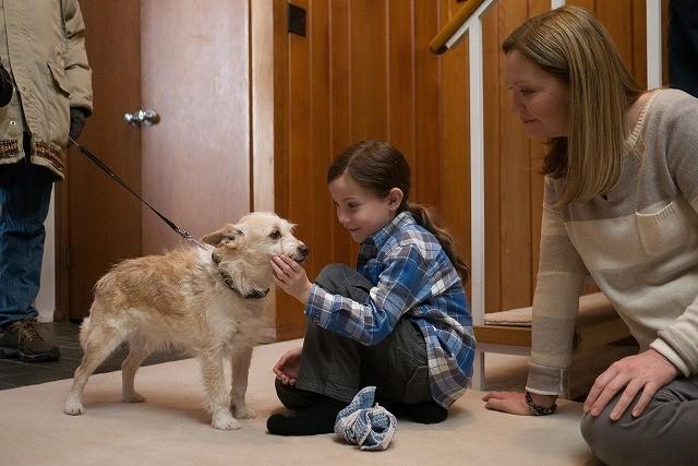 初めて触れる本物の犬に感動