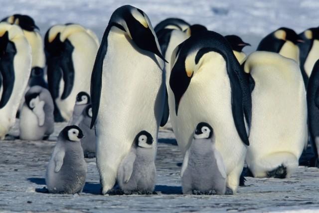 オスカー受賞の傑作ドキュメンタリー「皇帝ペンギン」続編製作へ