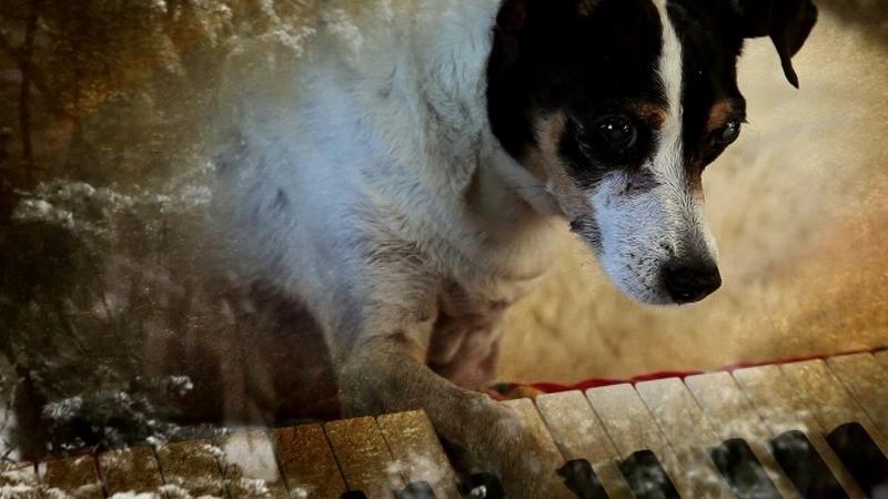 ルー・リードに捧げる映画 ローリー・アンダーソン「ハート・オブ・ドッグ」公開