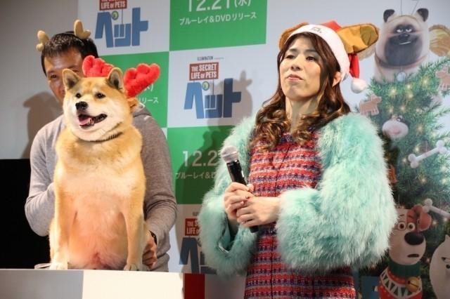 吉田沙保里、初対面の人気犬・柴犬まるにメロメロ「むっちゃかわいいー!」 - 画像1