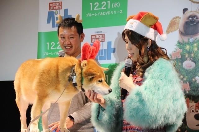 吉田沙保里、初対面の人気犬・柴犬まるにメロメロ「むっちゃかわいいー!」 - 画像7