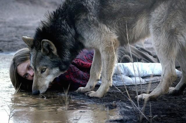 オオカミと人間の禁断の愛を描く