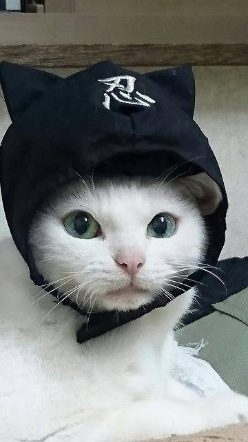 猫好き集まれ! 「猫忍」あなご&金時の萌えキュン場面カット42枚一挙公開! - 画像1