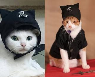 メディアに引っ張りだこのスター猫あなご(左)と新作主演の金時「猫忍」