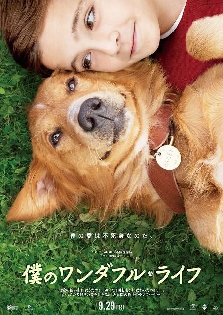 かつての愛犬が転生したら…L・ハルストレム監督「僕のワンダフル・ライフ」9月公開
