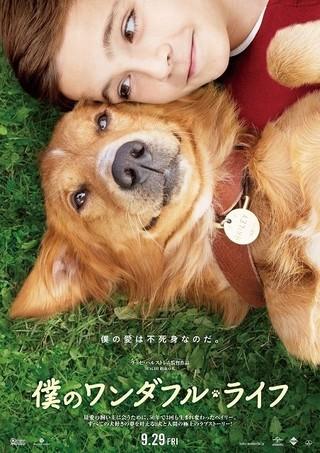 飼い主に会うために愛犬が転生「HACHI 約束の犬」