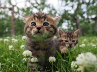 「劇場版 岩合光昭の世界ネコ歩き」の一場面「劇場版 岩合光昭の世界ネコ歩き コトラ家族と世界のいいコたち」