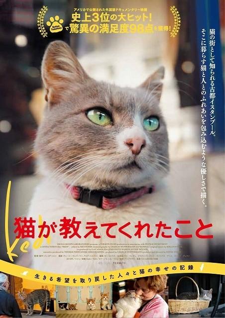 トルコの古都で暮らす野良ネコ7匹映すドキュメンタリー映画、日本は11月公開!