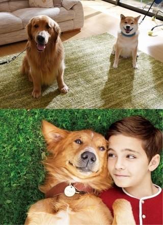 AmazonのCM犬ゼウス×インスタ犬...