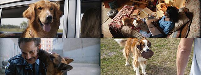 4匹だけど同じ犬!キュートな名演収めた「僕のワンダフル・ライフ」特別映像公開