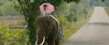 象と中年男性のロードムービー「ポップ・アイ」 シンガポールの監督、タイを舞台にした理由は?