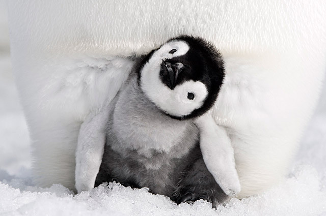 草刈正雄、ペンギン親子の愛と絆に涙……