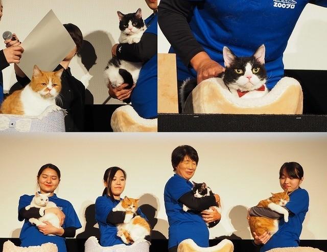 """「旅猫」ナナ、ふてニャンら""""人気猫""""集結!""""ネコデミー賞""""は誰の肉球に?"""