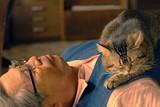 """全シーン、必ずどこかに猫がいる!「ねことじいちゃん」""""猫だらけ""""の特別映像公開"""
