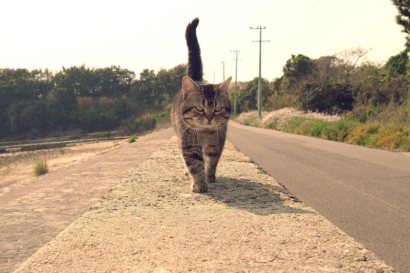猫好き、悶絶必至!「ねことじいちゃん」秘蔵カット全網羅