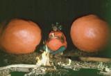 「アタック・オブ・ザ・キラートマト」