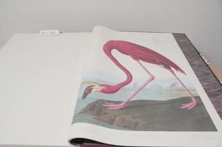 劇中に登場する「アメリカの鳥類」の複製本「アメリカン・アニマルズ」