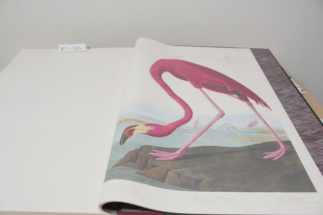劇中に登場する「アメリカの鳥類」の複製本