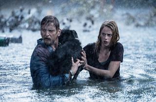 愛犬との再会がまさかの惨劇に…「クロール 凶暴領域」衝撃映像が公開