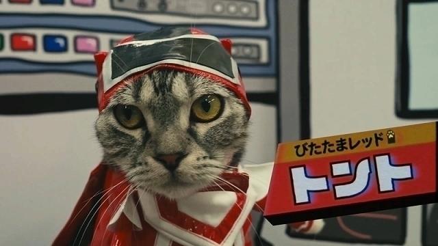 「ネコ戦隊びたたま」放送開始