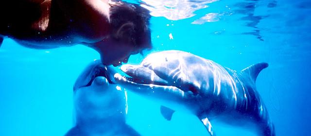 【佐々木俊尚コラム:ドキュメンタリーの時代】「ドルフィン・マン ジャック・マイヨール、蒼く深い海へ」