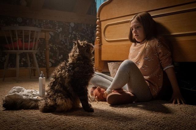 愛猫の豹変がトラウマ級!「ペット・セメタリー」本編映像入手