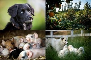 """""""究極の農場""""に暮らす動物たちに癒される!「ビッグ・リトル・ファーム」場面写真"""