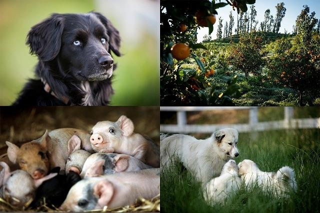愛らしい動物たちに癒される