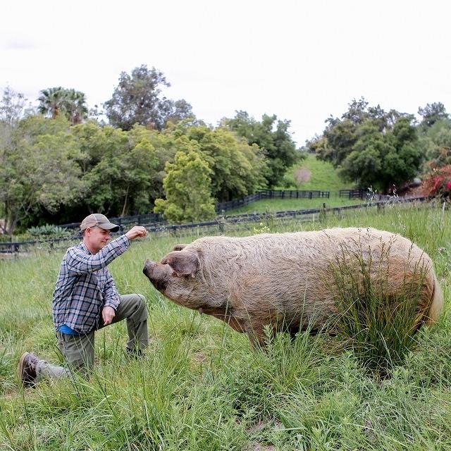 """自然を愛する夫婦が挑む""""究極の農場""""づくり 「ビッグ・リトル・ファーム」監督に聞く - 画像3"""