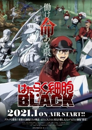 「はたらく細胞BLACK」21年にTVアニメ化 榎木淳弥&日笠陽子出演、ナレーションに津田健次郎