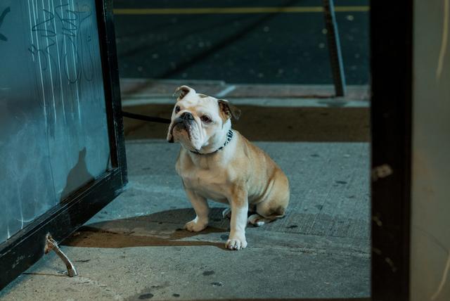 「パターソン」に出演していた犬のマーヴィン