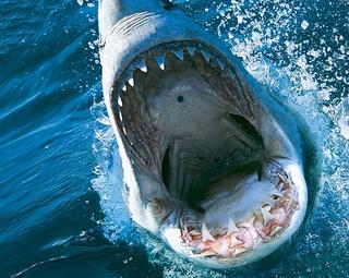 狂暴なサメの恐怖描く「ディープ・ブルー3」10月デジタル配信! 蒼れいな、ハリウッドデビュー