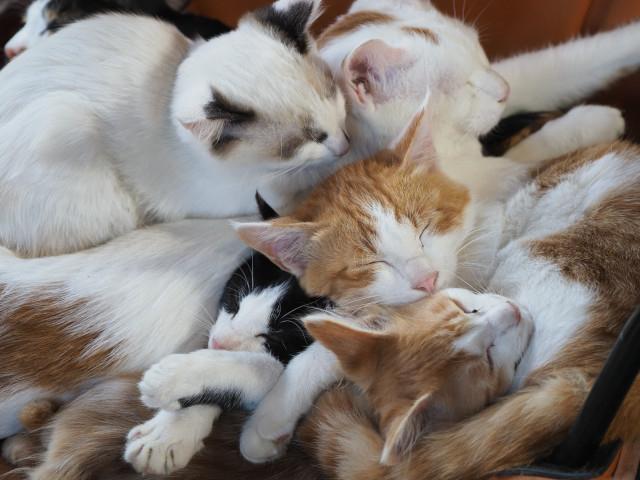 「劇場版 岩合光昭の世界ネコ歩き あるがままに、水と大地のネコ家族」21年1月8日公開