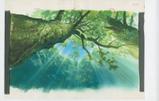 『もののけ姫』(1997)背景画 © 1997 Studio Ghibli・ND