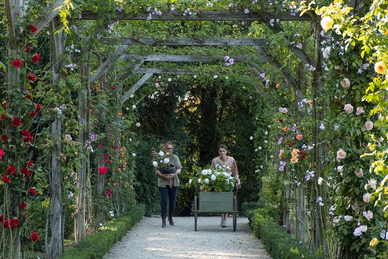 バラの国際コンクールを完全再現 「ローズメイカー 奇跡のバラ」冒頭映像公開