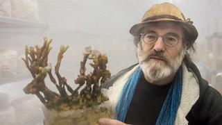 """まるでSF!菌類による驚異の小宇宙を覗く""""きのこ""""ドキュメンタリー予告編"""