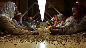 貧しい途上国のコーヒー農家の実情を描く 「おいしいコーヒーの真実」